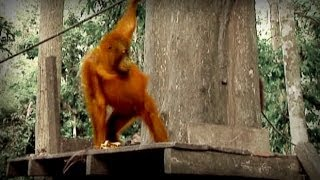Download Jungle of the Red Spirit (full documentary) Video