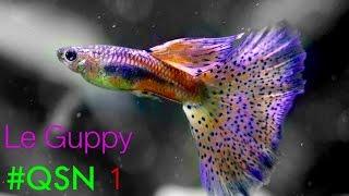 Download #QSN : 1. LE GUPPY Video
