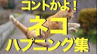 Download おもしろかわいいネコのハプニング動画集〜コントかよ! Video