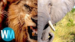 Download Top 10 Most Dangerous Animals in the World Video