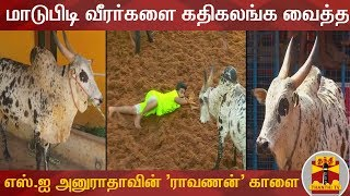 Download மாடுபிடி வீரர்களை கதிகலங்க வைத்த எஸ்.ஐ அனுராதாவின் 'ராவணன்' காளை | Jallikattu | AnuRadha | Ravanan Video