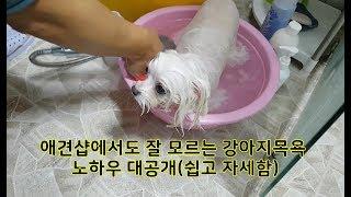 Download 애견샵에서도 잘 모르는 강아지목욕 노하우공개(쉽고 자세함)-Dog Grooming - Bathing Video