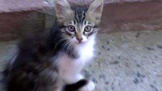 Download 猫と仲良くなる方法・裏技を使って野良猫に目薬をさす!(NNNですよ~) Video