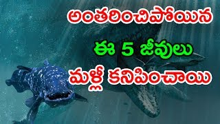 Download World's 5 Extinct Creatures Found Again    రాక్షసబల్లుల కాలం నాటి ఈ 5 జీవులు మళ్లీ పుట్టాయి    CC Video