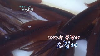Download 바다의 공작어, 오징어 [어영차바다야] Video