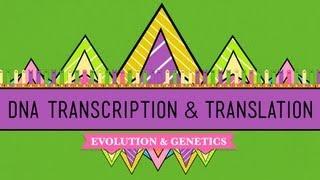 Download DNA, Hot Pockets, & The Longest Word Ever: Crash Course Biology #11 Video