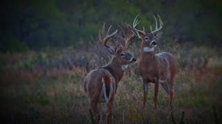 Download One of Largest Bucks ever taken with Bow and Arrow on Camera. 234 Gross. Full Draw Adventutres Video