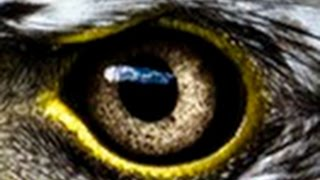 Download Amazing Evolution of Eyes(Nature Documentary)HD Video