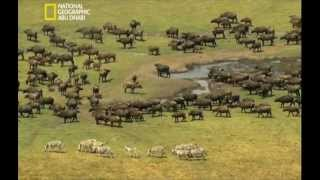 Download زامبيزي مصدر الحياه Video