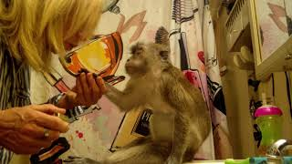 Download Pampered Princess Monkey Ready For Bed Video