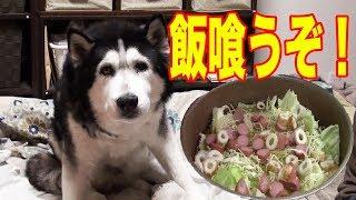 Download 大型犬はやはり喰います ハスキー犬 秋田犬シ ェパード犬の食事 Video