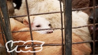 Download Dining on Dogs in Yulin: VICE Reports (Part 2/2) Video