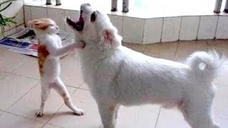 Download Be careful! YOUR JAW WILL HURT FROM LAUGING - Ultra FUNNY ANIMAL compilation Video