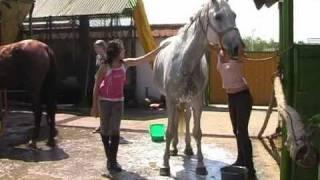 Download Lovas felvonulásra készülünk a Bíbor Horse-ban Video