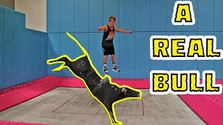 Download TRAMPOLINE VS BULL (ft. The Dudesons) Video