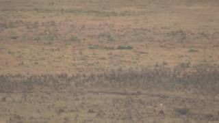 Download Ngorongoro crater - Hyenas attacking a zebra Video