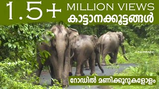 Download Athirappilly to Malakkapparai (via) Sholayar Rain Forest Video