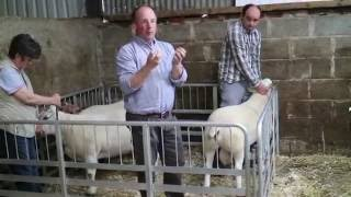 Download Preparing for breeding: how to carry out a ram NCT Video