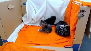 Download Kittencam - '24/7' kitten live-stream Video