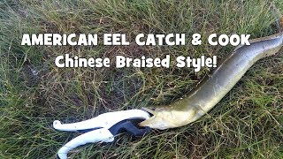 Download EEL CATCH & COOK! ″Chinese Style″ Braised Fish! (South Kingstown/Philadelphia, RI/PA) Video