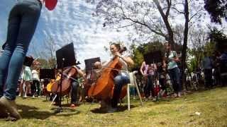 Download Flash Mob Curtin University & Perth Symphony Orchestra Video