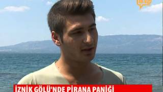 Download İznik Gölü'nde Pirana Paniği 02 Temmuz 2015 Video