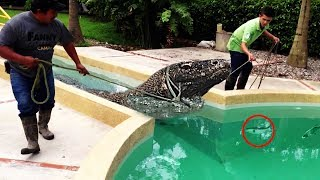 Download 10 Most Unusual Pets in the World Video