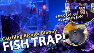Download Catching fish in stocked reef tank!! {emotional} Video