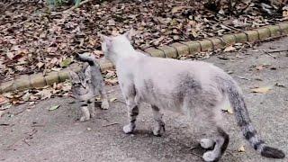 Download 野良猫のママ猫をナデナデしたら逃げていった子猫を呼び戻してくれた Video