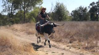 Download 10.14.12 Jazzy the Longhorn Loping Video