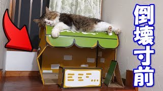 Download 猫カフェが倒壊寸前です‥(゚Д゚;) Video