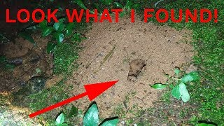 Download LOOK WHAT I FOUND IN MY BACKYARD! Video