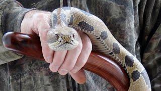 Download Wood Carved Timber Rattlesnake Walking Cane #59 Video