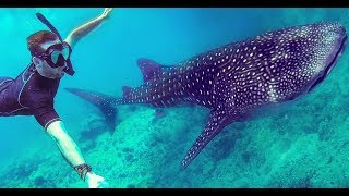 Download Vilamendhoo, Maldives. GoPro with Whale Shark, Turtles and Coral Reefs Video