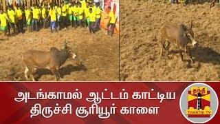 Download களைகட்டும் ஜல்லிக்கட்டு - அடங்காமல் ஆட்டம் காட்டிய திருச்சி சூரியூர் காளை | Trichy | Jallikattu2020 Video