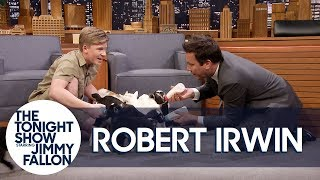 Download Robert Irwin and Jimmy Feed Baby Pygmy Goats Video