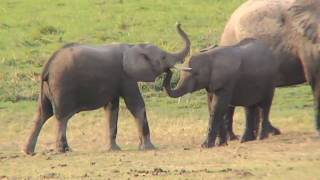 Download Wings over Kenya, an African Safari (2007) Video