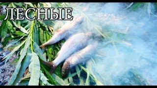 Download ГОРЯЧЕЕ КОПЧЕНИЕ РЫБЫ и РЫБА В УГЛЯХ - Примитивная кухня | Бушкрафт посуда | FISH IN COALS Video