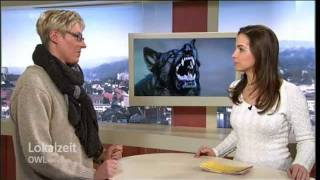 Download Lokalzeit OWL Vom Kampfhund zum Schoßhund Video