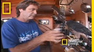 Download High-Velocity Falcon | National Geographic Video