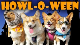 Download HALLOWEEN DOG COSTUME PARTY for CORGIS - Life After College: Ep. 447 Video