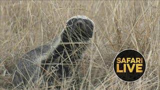 Download safariLIVE- Sunrise Safari - July 6, 2018 Video