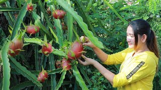 Download Yummy Dragon Fruit Dessert - Pick Dragon Fruit For Dessert - Cooking With Sros Video