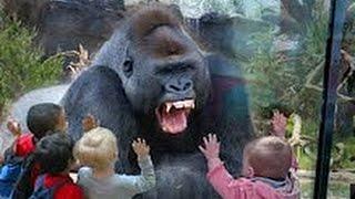 Download NAPADI Životinja U Zoo Vrtu - [Kompilacija Videa] Video
