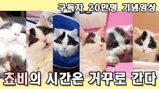 Download 고양이의 시간은 거꾸로 간다 - 쵸비편. 구독자 20만명 기념영상 Video