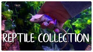 Download Small but Growing Reptile Collection Video