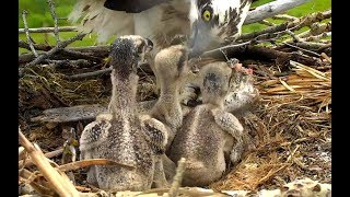 Download Lunch at Charlo Ospreys. 11.48 / 21 June 2018 Video