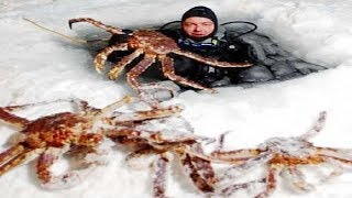 Download Amazing Fishing Alaska King Crab on Sea Ice - Fastest Fish Catching on The Sea Video