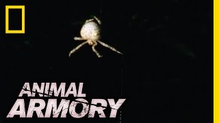 Download An Alluring Spider | Animal Armory Video