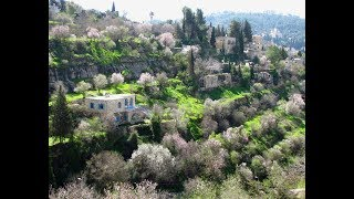 Download JERUSALEM TRAIL   MTB   TECHNICAL   ISRAEL   GOPRO 7 BLACK   YETI SB5.5   ENDURO   סינגלים עין כרם   Video